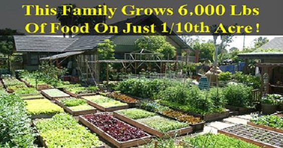 family grows food in small area but self sufficient