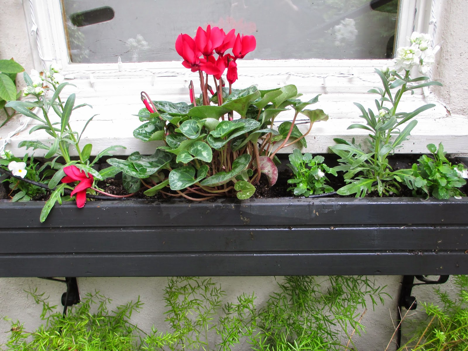 An s Way Quick Window Boxes for Christmas