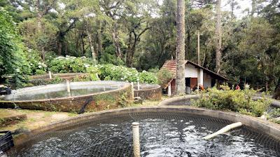 O Restaurante Paulo das Trutas possui um trutário para criação do peixe que só vive em águas frias com altitudes elevadas.