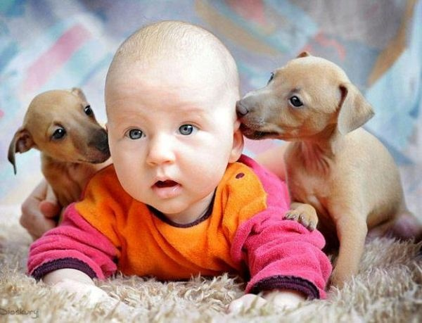 Cute puppies and Baby picture