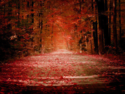 Wallpaper On A Nice Road The Looks Really Great Due To Fallen Leaves It Creates Magnificent Natural Color Combination Which Can Delight