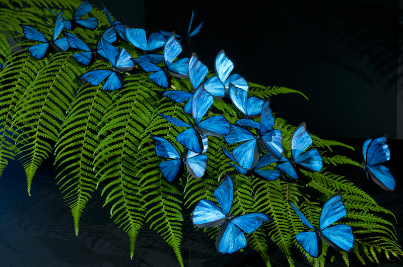 blue butterfly group - photo #20