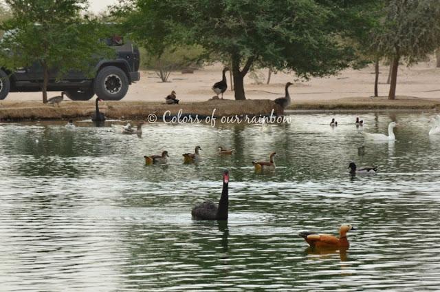 Al Qudra cycling Track, Al Qudra Lakes, Al Qudra camping @colorsofourrainbow.blogspot.ae