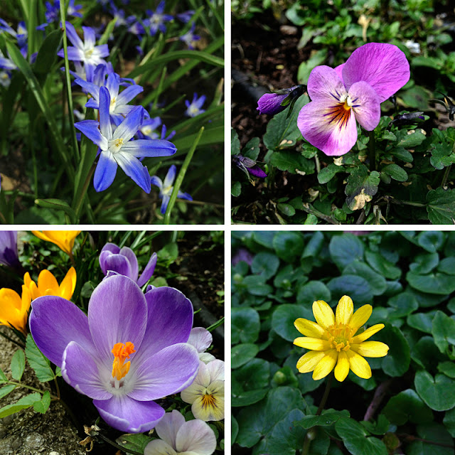 collage spring flowers floral love