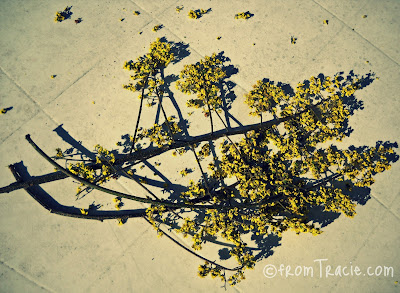 Branches of Yellow