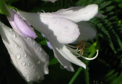 El agua en nuestro jardín