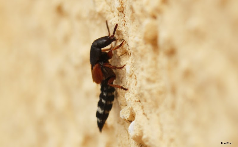 Insecte inconnu
