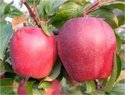 Tratati-va cu ramurele din pomi fructiferi