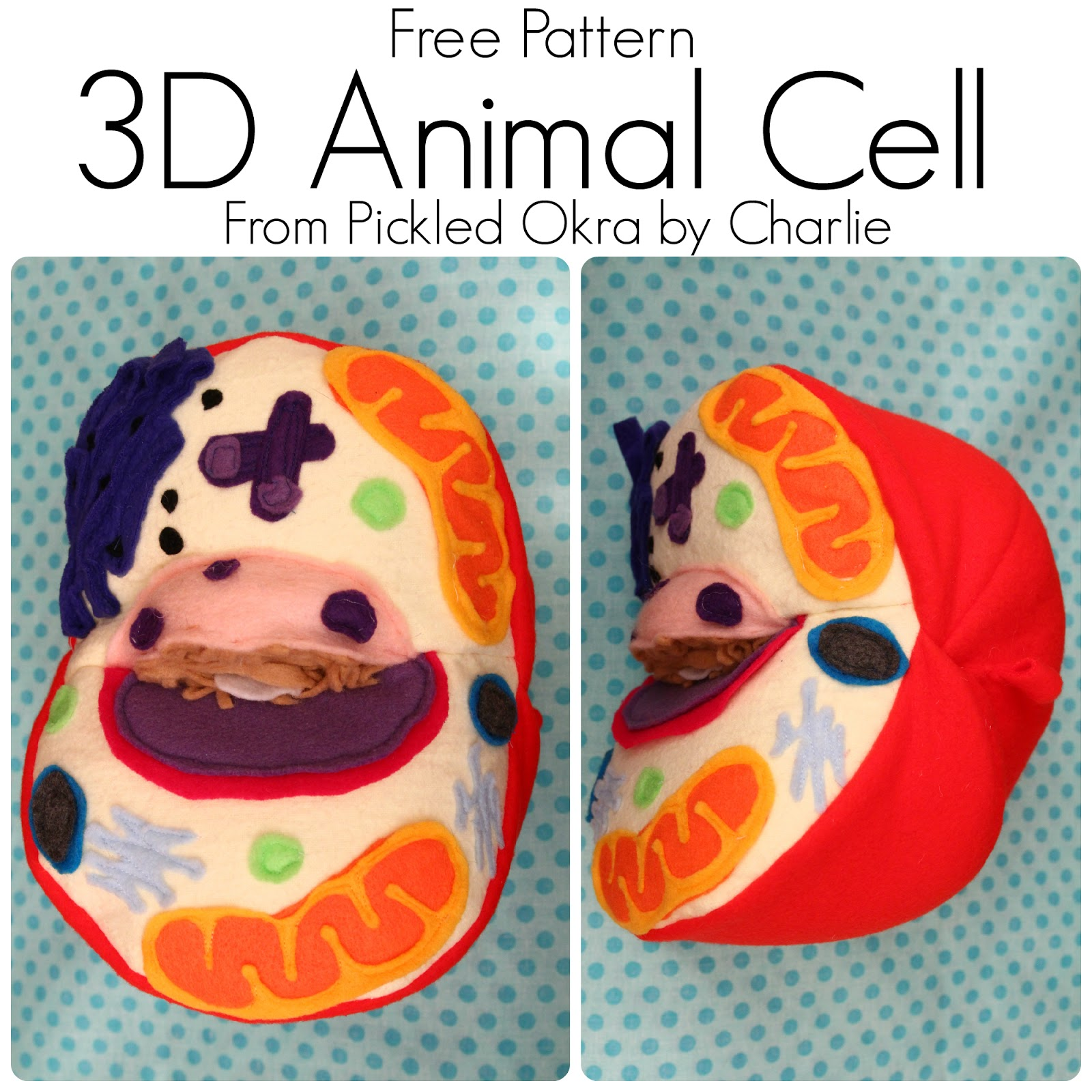 Labeled Plant Cell 7th Grade 3d Diagram Animal Or Model