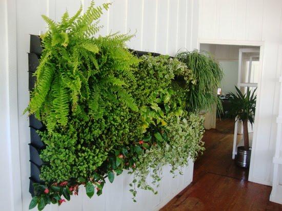 jardim vertical urbano:Ecoparede, da Ecotelhado, pode ser instalado em qualquer local e