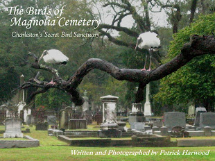 """The Birds of Magnolia Cemetery: Charleston's Secret Bird Sanctuary"""