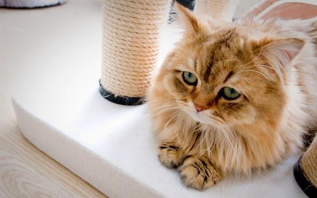 tải hình nền mèo con đẹp nhất