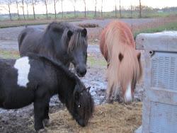 Onze 3 paardjes Buddy, Gaski en Fenja