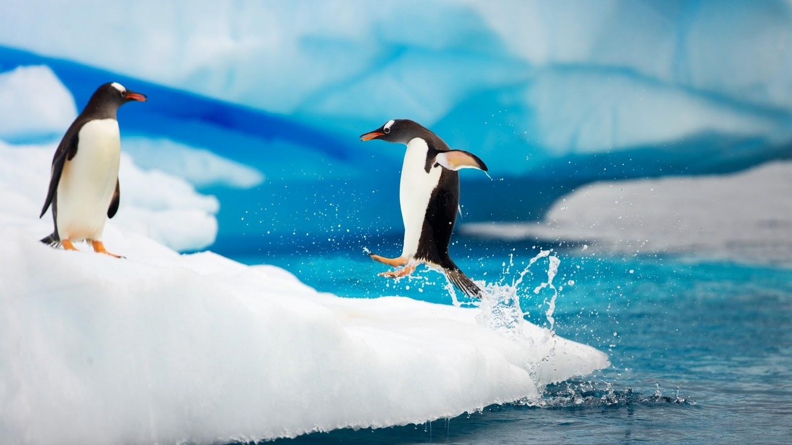 http://2.bp.blogspot.com/-w7d_KXZDAg4/Tvyl7joM2XI/AAAAAAAAAHA/fUdfLZAZL0o/s1600/cute-penguins-wallpapers.jpg