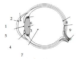 bagian-bagian mata dan fungsinya