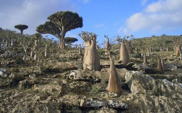 socotra+island+pulau+dajjal billyinfo6 Keanehan Pulau Socotra di Yemen, pulau Dimana DAJJAL Dirantai?