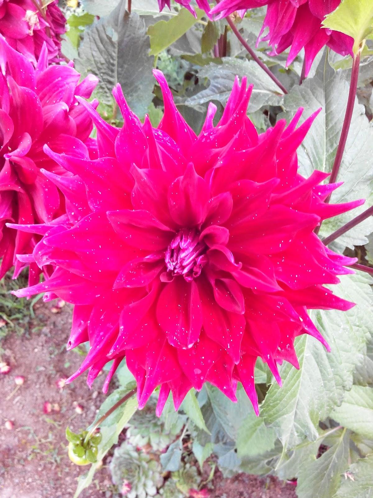 fleur, jardin, bullelodie
