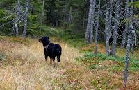 """""""På tur og eventyr i skog og fjell"""""""