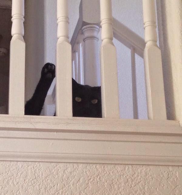 Смешной кот машет лапой Привет!
