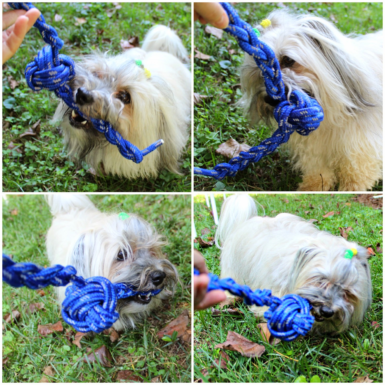 To dog with love september 2014 at tractor supply its always like a fun scavenger hunt for me looking for the best items i can use in their bargain bins the rope i used in this toy was solutioingenieria