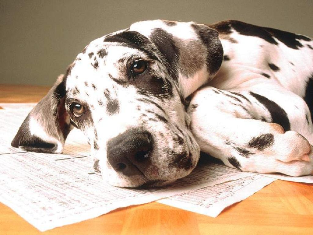 http://2.bp.blogspot.com/-w9A5TVJDZHo/TcwBzXMuqyI/AAAAAAAAM3o/cY80AxG_c5U/s1600/dog_1.jpg