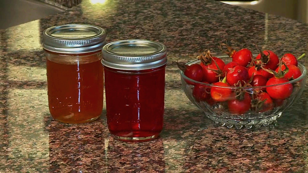 Temperate climate permaculture permaculture plants rugosa roses - What to do with rosehips jelly and vinegar ...
