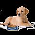 Como alimentar a un cachorro - Frecuencia de alimentación y cantidades