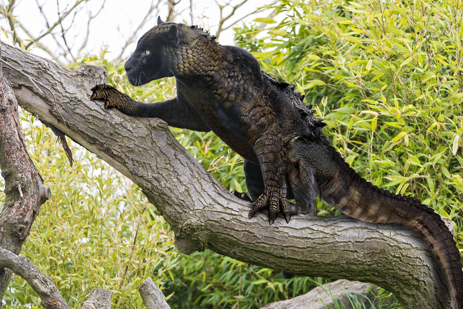 hybrid animals To create a natural macropod hybrid, young animals of one species have been transferred to the pouch of another so as to imprint into them the other species this hybrid was created by.