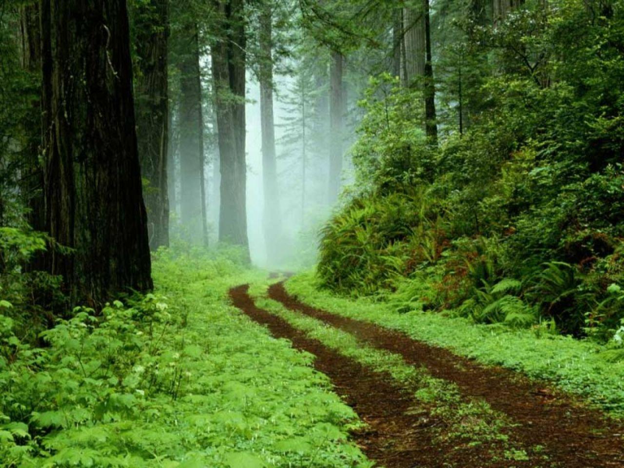 http://2.bp.blogspot.com/-wAD2Um7AERM/TcRpqmWR_pI/AAAAAAAABP0/rkziEs0xpKg/s1600/bosques-9.jpg