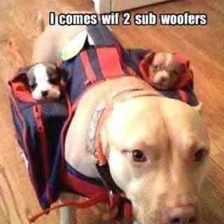 I Come Wif 2 Sub Woofers