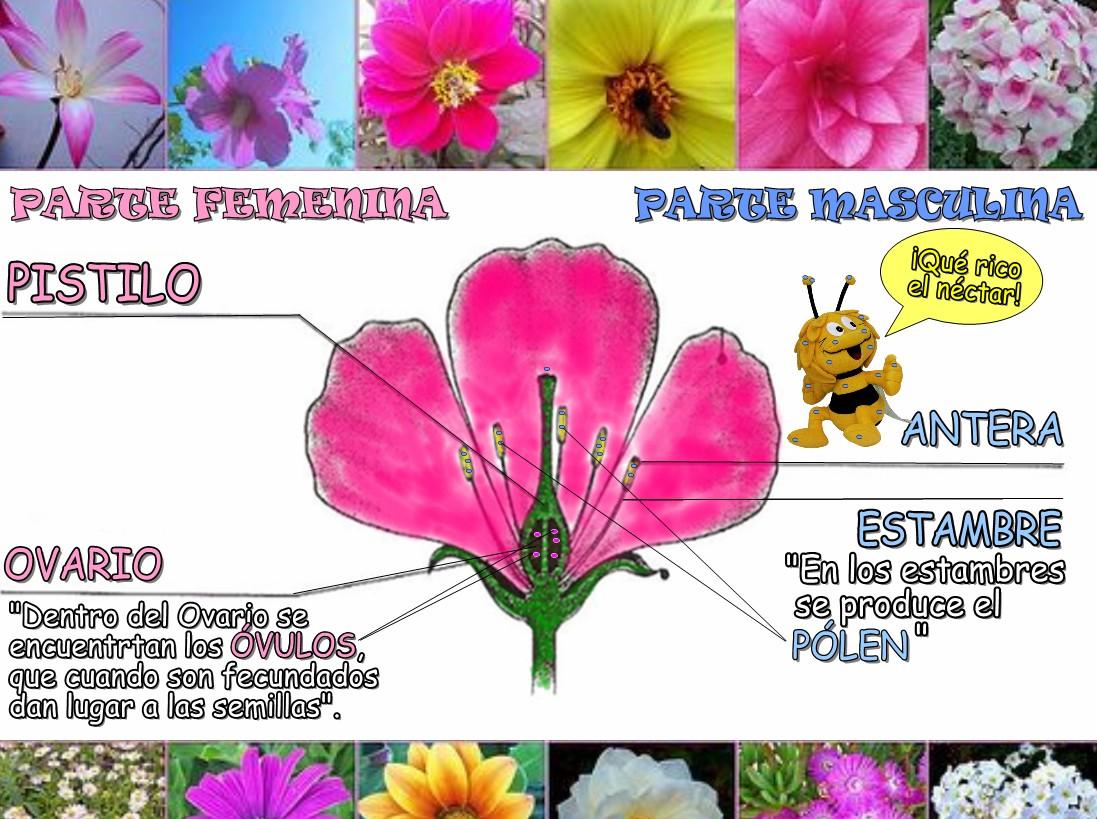 la flor d: