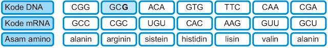 Delesi nukleotida mutasi gen normal