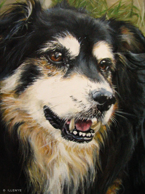 jeanne illenye looking after them...: Border Collie Mix ...