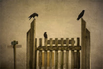 Crows Three