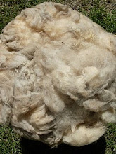 El que tiene ovejas, tiene pellejas.