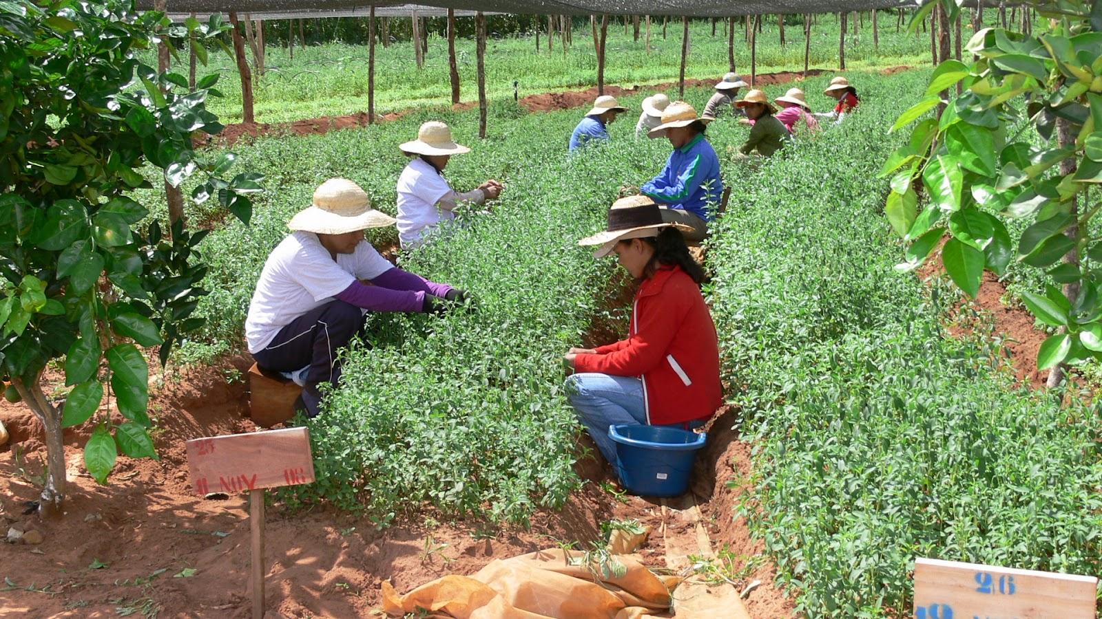 Seguridad alimentaria y desarrollo sostenible