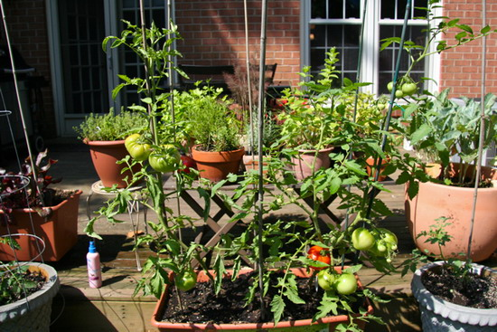 Cher shots something to ponder - Soil for container vegetable gardening ...