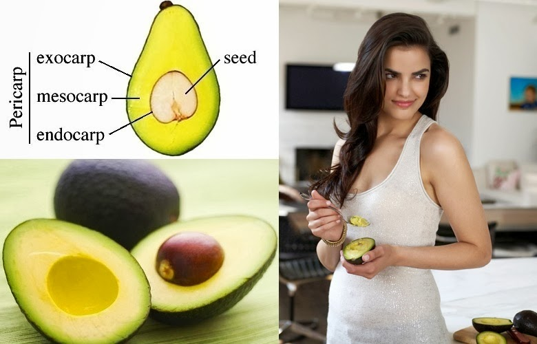 Avocado Farming Business