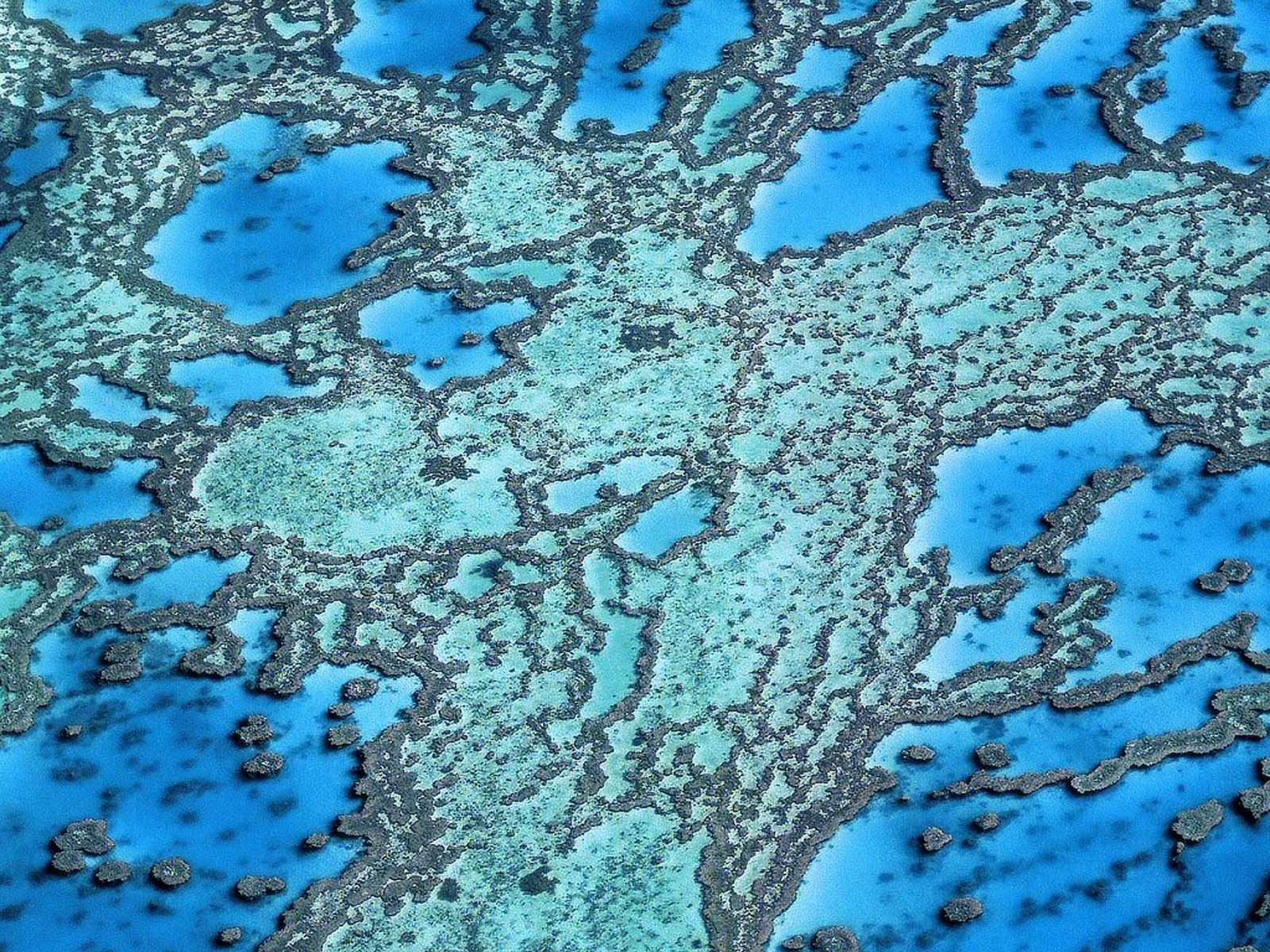 http://2.bp.blogspot.com/-wBfTTOdmXr0/T1-gd06KpCI/AAAAAAAACmk/zmDxa4y0SBs/s1600/Great_Barrier_Reef_wallpaper_pictures_4.jpg