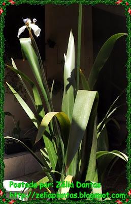 folhagem, planta ornamental