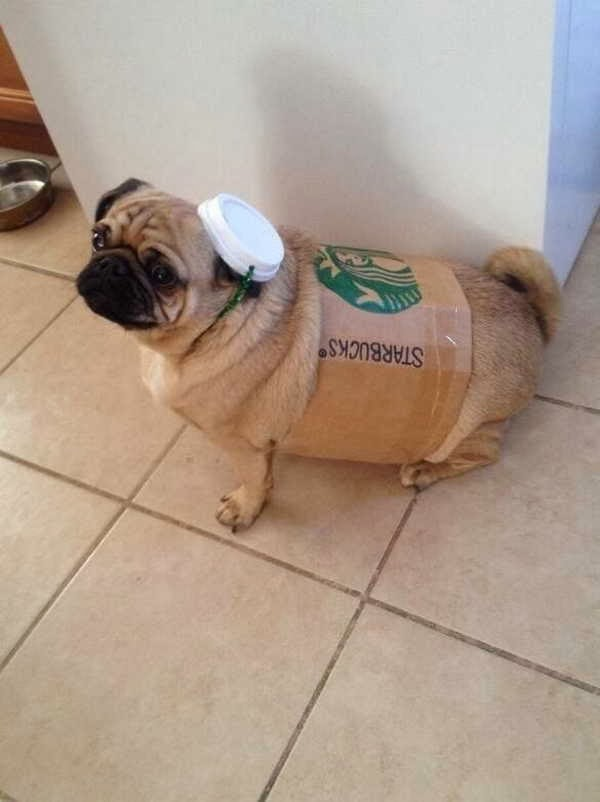 Funny animals of the week - 13 December 2013 (40 pics), pug wears starbucks cup costume