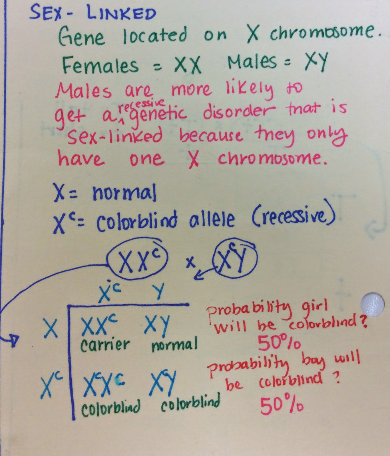 worksheet Genetics And Probability Worksheet genetics yhs science complete the sex linked crosses worksheet watch video below for how to solve problems you may need one of being solved for