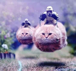 Imperial troopers using cats as speeder bikes