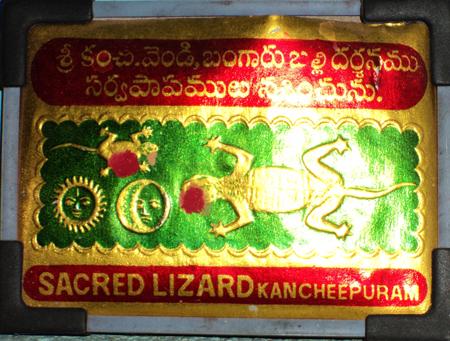 Lizard - balli shastra
