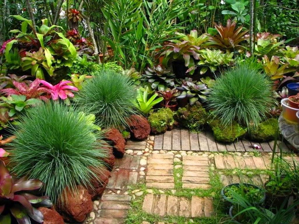 Arte y jardiner a dise o de jardines poner las cosas en - Plantas tropicales para jardin ...