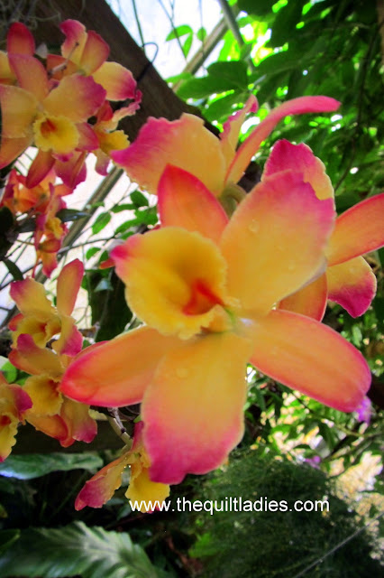 Yellow and Pink Orchid in Bloom