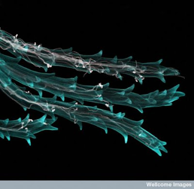 Wonderful Microscopic Images from the Natural World Seen On  www.coolpicturegallery.us