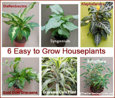 6 Easy to Grow Houseplants