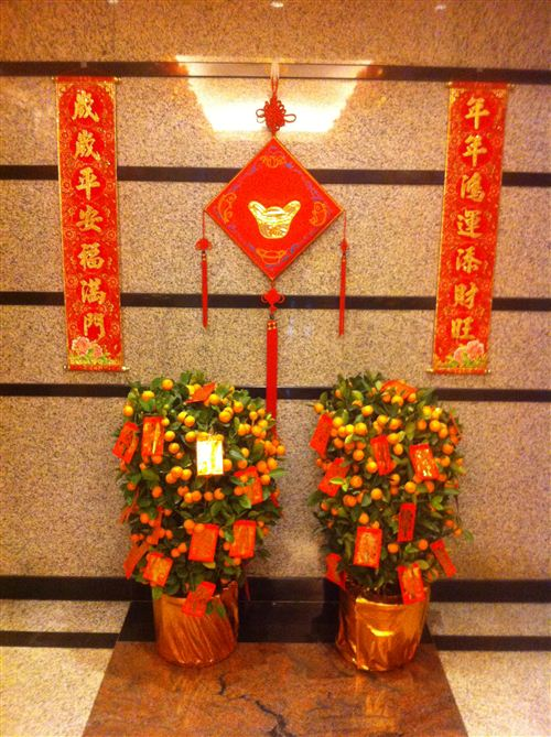 Unique Chinese New Year Plant Decoration