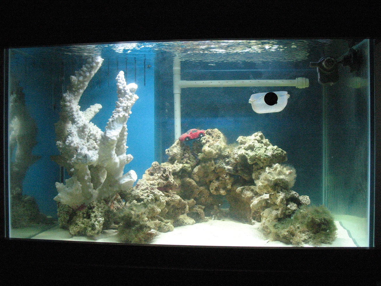 how to bring alkalinity down in fish tank